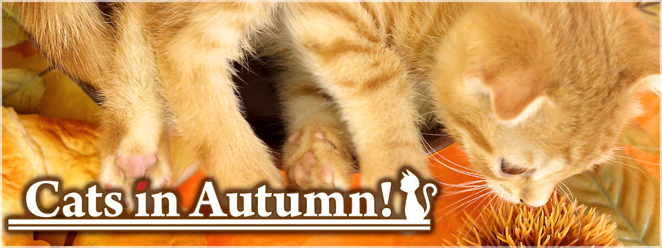 Cats in Autumn!